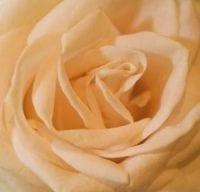 Blütenzauber für unvergessliche Momente