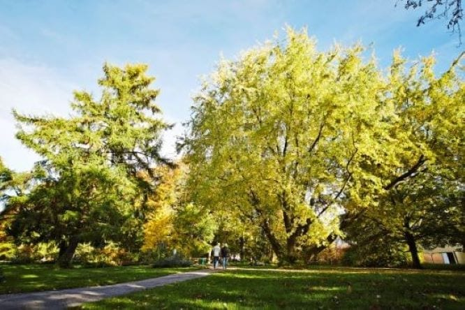 Bäume Bad Wörishofen Allgäu